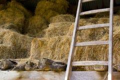 Vieille grange (de foin) Images stock
