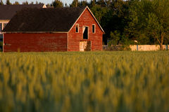 Vieille grange rouge de pays Images libres de droits