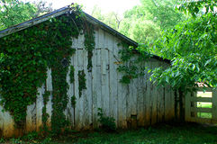 Vieille grange rustique avec l'élevage de vignes Photographie stock libre de droits
