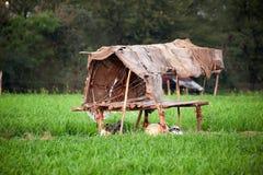 Vieille hutte endommagée Images stock