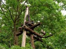 Vieille ligne électrique en bois images libres de droits