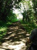Vieille ligne ferroviaire, Hunwick Photographie stock