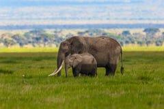 Vieille mère d'éléphant avec le veau Image libre de droits
