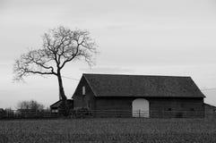 Vieille maison avec l'arbre en noir et blanc Images libres de droits