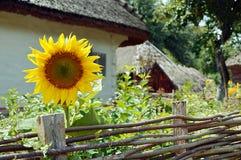 Vieille maison en bois avec le tournesol Image libre de droits