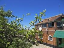 Vieille maison faite de briques, arbre dans l'avant photos libres de droits