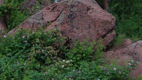 Vieille montagne de pierre de tapis de feuilles en bois de forêt banque de vidéos