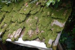 Vieille mousse couvrant le toit Image stock
