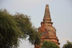 Vieille pagoda avec l'arbre de jujube images stock
