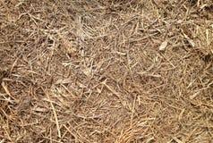Vieille paille ou foin se trouvant sur la terre Texture d'herbe sèche cru image stock