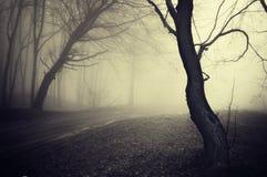Vieille photo de regard d'un chemin à travers une forêt avec Photographie stock libre de droits