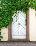 Vieille porte blanche avec la plante grimpante de Virginie Photo stock