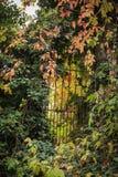 Vieille porte dans la forêt Photo stock