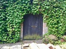 Vieille porte de bâtiment entourée par le lierre vert photographie stock libre de droits