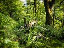 Vieille porte et barrière en bois envahies avec les fougères denses sur un plancher vert vibrant de région boisée avec les arbres photo libre de droits