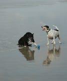 Vieille réflexion de chiens Photos stock