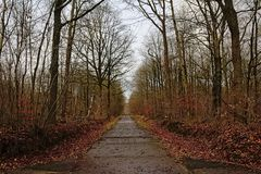 Vieille route bétonnée militaire par une forêt nue d'hiver image stock