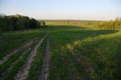 Vieille route par le champ et la forêt Photographie stock libre de droits