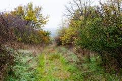 Vieille route rurale abandonnée envahie Photographie stock
