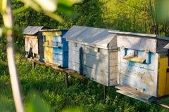 Vieille ruche avec des abeilles Photo libre de droits