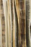 Vieille série de dictionnaire Images libres de droits