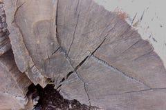 Vieille section transversale de tronçon d'arbre image libre de droits