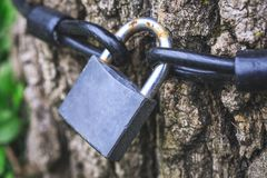Vieille serrure rouillée sur l'arbre Cadenas accrochant de l'arbre en tant que des talis Photos libres de droits