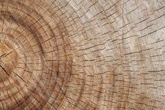 Vieille surface de coupe de chêne photographie stock