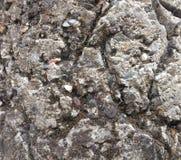 Vieille texture concrète grunge de ciment Images libres de droits