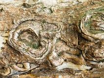 Vieille texture d'écorce Photos libres de droits