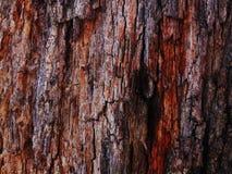 Vieille texture d'arbre image libre de droits