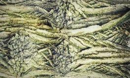 Vieille texture d'arbre Image stock