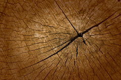 Vieille texture de coupe en bois de teck Photographie stock libre de droits