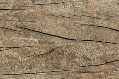 Vieille texture de fond de ride de peau d'arbre Photos libres de droits