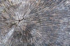 Vieille texture de tronçon d'arbre pour la conception Photos stock