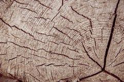 Vieille texture de tronçon d'arbre pour la conception Images libres de droits
