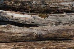 Vieille texture de troncs d'arbre Images stock