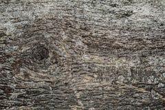 Vieille texture en bois avec de la mousse images stock