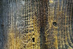 Vieille texture en bois brune, foyer mou photo libre de droits