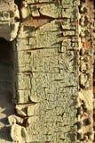Vieille texture en bois criquée Photo libre de droits