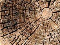 Vieille texture en bois de boucles d'arbre Images libres de droits