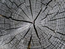 Vieille texture en bois de boucles d'arbre Photos stock