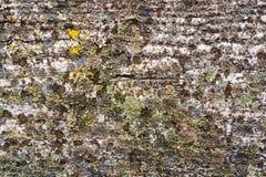 Vieille texture en bois grunge Image stock