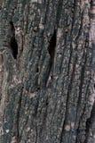 Vieille texture en bois noire Photographie stock