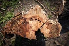 Vieille texture en bois panneaux de fond pour la conception Image stock