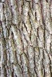 Vieille texture en bois peinte Images libres de droits
