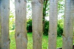 Vieille texture en bois verte de planche comme fond closeup photo stock