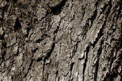 Vieille texture naturelle d'arbre Photo libre de droits