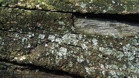 Vieille texture putréfiée abstraite de tronçon Milieux en bois de mur Image libre de droits