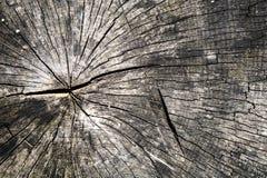 Vieille texture putréfiée de tronc d'arbre photographie stock